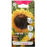 Giant Sunflower Seed