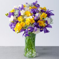 Iris and Freesias Large - Bunches Gifts