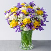Iris and Freesias XL - Bunches Gifts