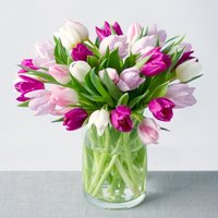Spring Tulips Large - Bunches Gifts