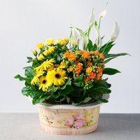 Sunshine Planter - Bunches Gifts