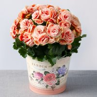 Vintage Begonia - Bunches Gifts
