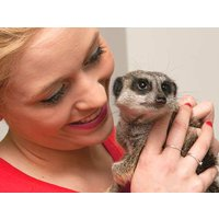 Meerkat Encounter For Two - Was £79, Now £49 Picture