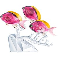 Swarovski Anthias Fish Trio