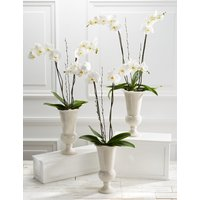Majestic Ivory Celebration Orchid Trio (Available for delivery from 5th January 2019)