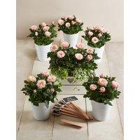 Celebration Table Plan - Pale Pink