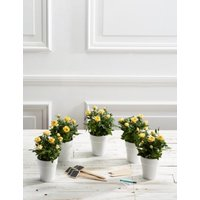 M&S Celebration Table Plan - 5 Additional Tables - Yellow Rose