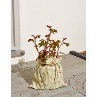 Happy Birthday Rose Tree