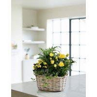 Spring Flowering Basket