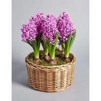 Pink Hyacinth Basket (Available for delivery from 1st February 2019)