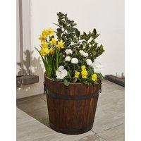 Extra Large Spring Flower Barrel