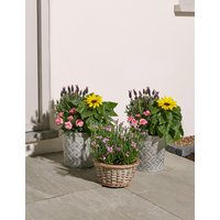 Bee Friendly Mixed Summer Flower Patio Planter Trio