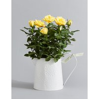 Autumn Yellow Rose Jug (Pre-Order: Available from 29th Aug 2018)