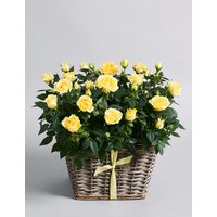 Yellow Rose Basket (Available for delivery from 21st March 2019)