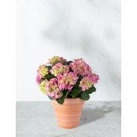 Hydrangea Patio Basket