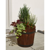 Extra Large Autumn Flowering Garden Barrel