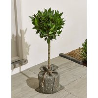Garden Bay Tree – New Lower Price