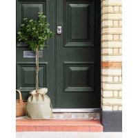 Garden Viburnum Tree