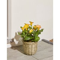 Yellow Calla Lily Patio Basket (Available for delivery from 25th April 2019)