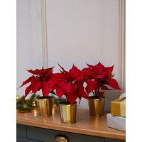 Christmas Red Poinsettia Glass Trio