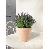 Butterfly Lavender Basket