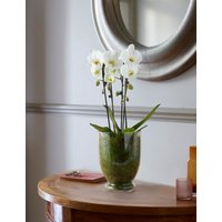 Luxury Orchid in Glass Vase