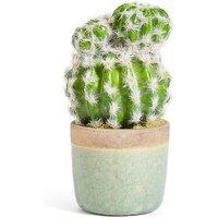 Medium Cactus