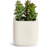 Small Garden Plant in Ceramic Pot