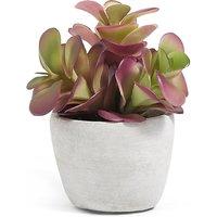 Small Succulent in Concrete Pot