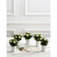 M&S Celebration Table Plan - 5 Additional Tables - Ivory Rose