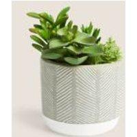 M&S Artificial Succulent Garden - 1SIZE - Green, Green