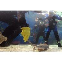 Shark Snorkel Ranger Picture
