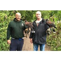 Bird Handling At Riverside Falconry Picture