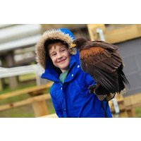 Full Day Medieval Falconry Experience At Hedingham Castle Picture