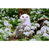 Owl Encounter At Riverside Falconry Picture