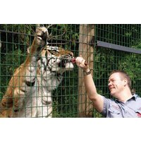Feed The Big Cats At Paradise Wildlife Park Picture