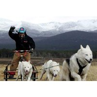 Sleddog Experience Picture