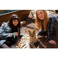 Meet The Meerkats, Servals And Lemurs At Hoo Farm For Two Picture