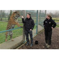 Weekday Big Cat Encounter Picture