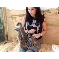 Meerkat Experience For Two And Adoption Pack Picture