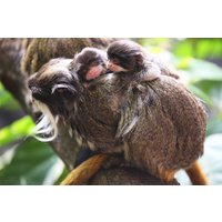 Visit Zsl London Zoo With Lunch At Belgo For Two