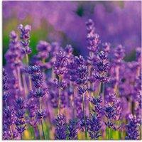 Artland Glasbild Lavendelfeld in Tihany, Ungarn, Felder, (1 St.)
