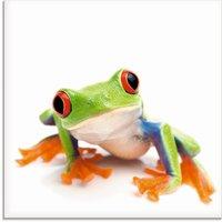 Artland Glasbild Großaufnahme eines Frosches vor weiß