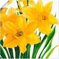 Artland Wandbild Gelbe Narzissen, Blumen, (1 St.), in vielen Größen & Produktarten - Alubild / Outdoorbild für den Außenbereich, Leinwandbild, Poster, Wandaufkleber / Wandtattoo auch für Badezimmer geeignet