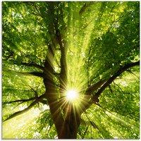 Artland Glasbild Sonne strahlt explosiv durch den Baum