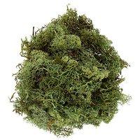 Islandmoos, grün, 250 g