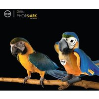 Steiff Lori Parrot (Blue and Yellow)