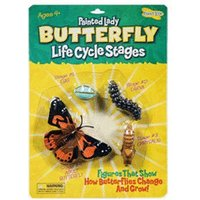 Insect Lore Painted Lady - Butterfly LifeCycle Stages