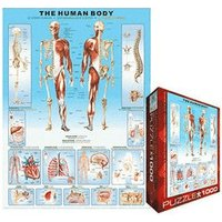Eurographics Puzzles The Human Body
