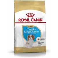 Royal Canin Cavalier King Charles Junior (1,5 kg)